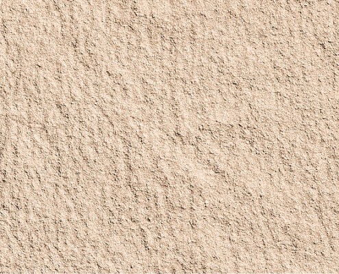 Sahara Fossil